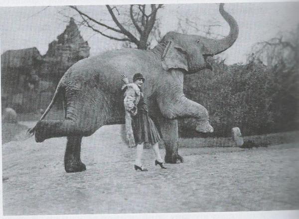 Слон и Павлова