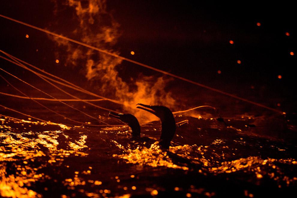 Бакланы в огне