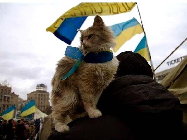 cat_maidan