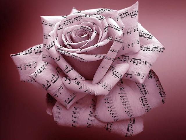 цветы музыки