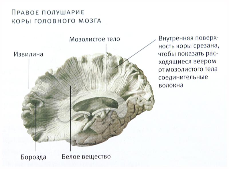 _MG_2622