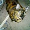 Zoe is staring at the kitty treats