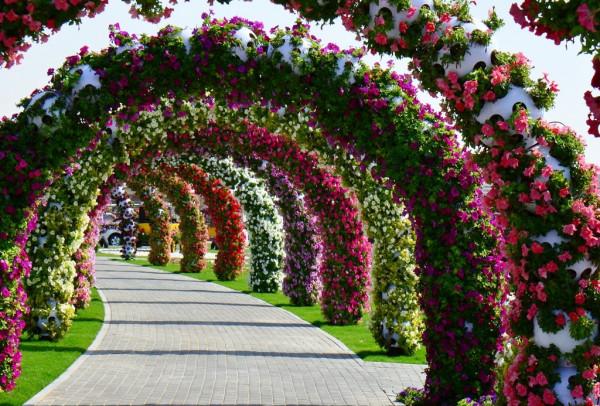 Dubai_Miracle_Garden_13