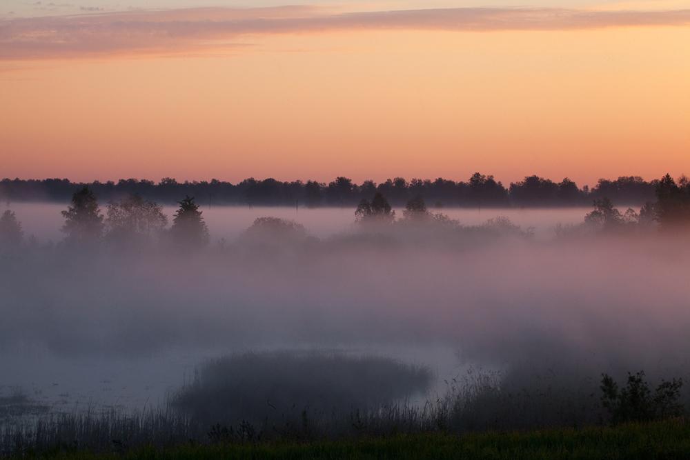 Туманное июньское утро