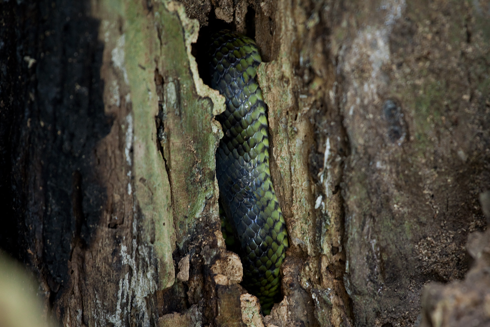 Змейка
