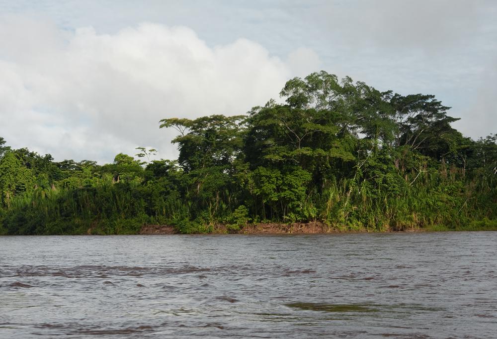 Рио Туичи