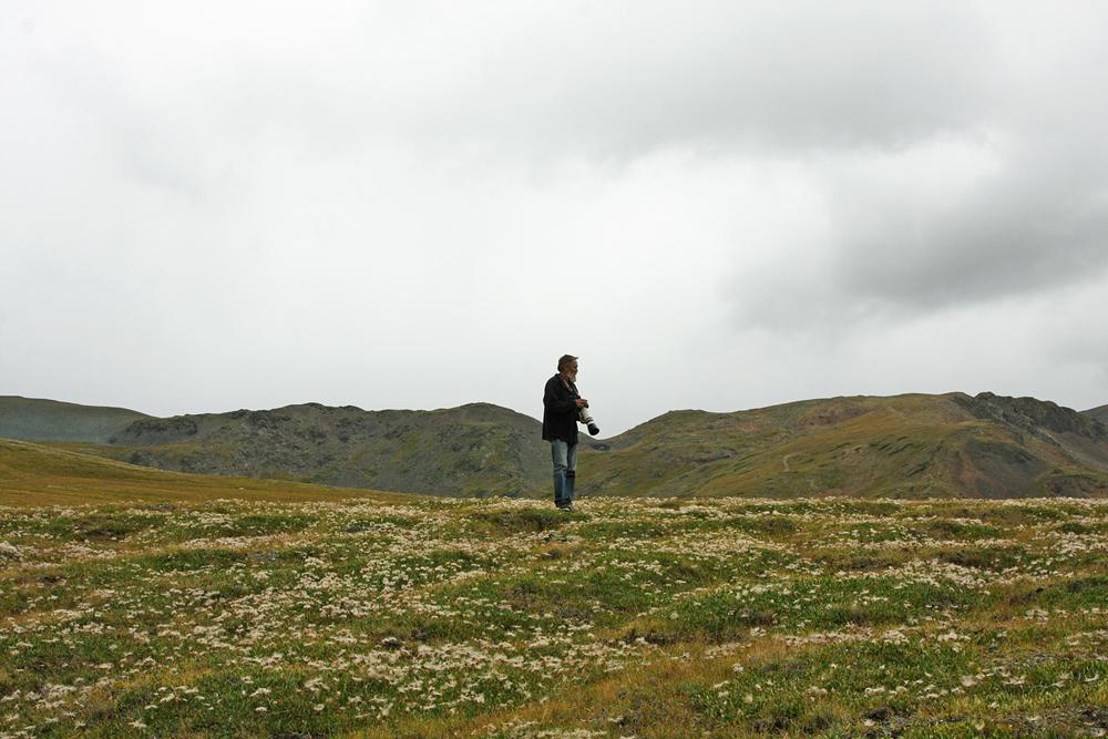 В горной тундре