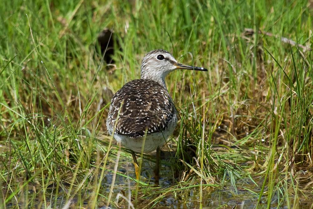 Птицы болот и лугов украины фото