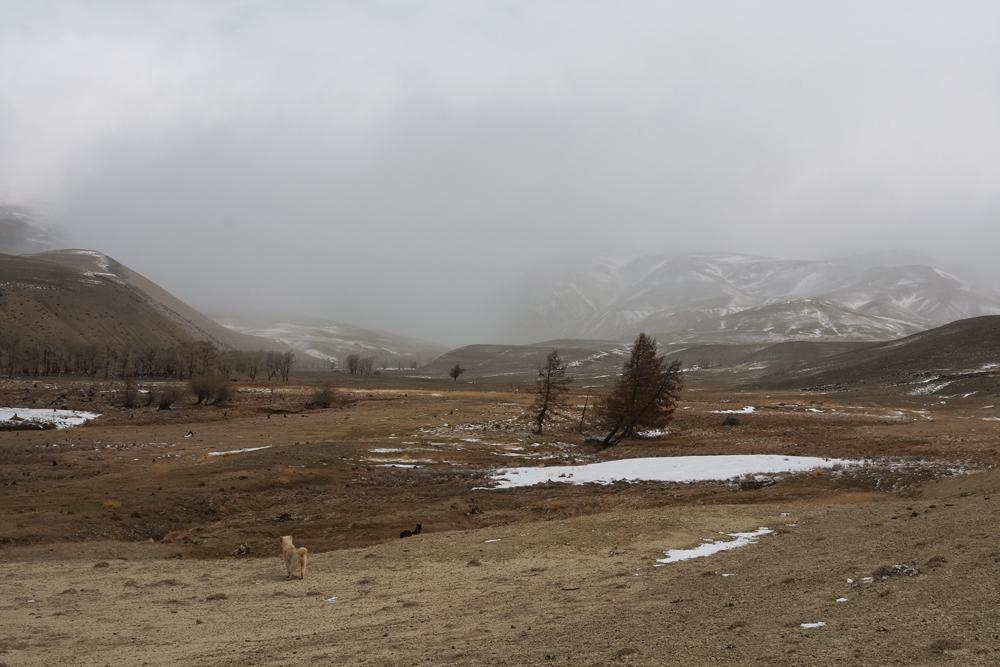 Снегопад. Гора. Собака.