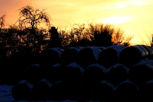 Silage bales at sunset