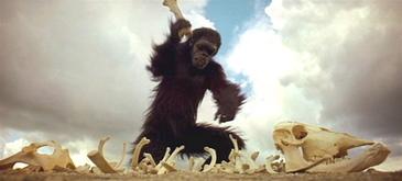 2001_ape