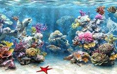 coral_reef_4