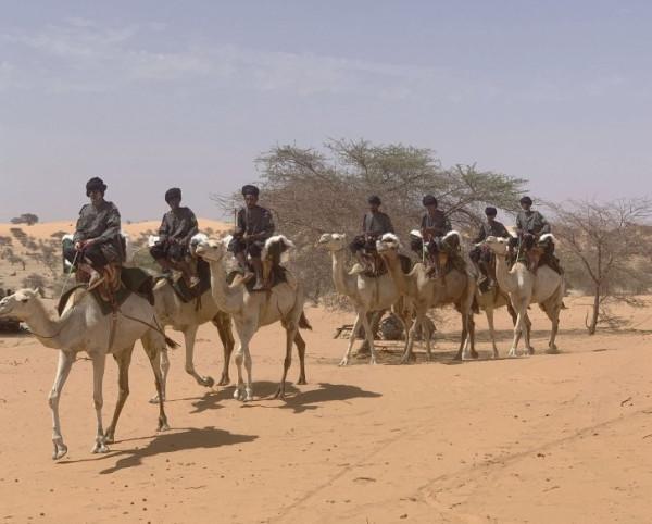 Европейский Союз поставляет верблюдов для Национальной гвардии Мавритании