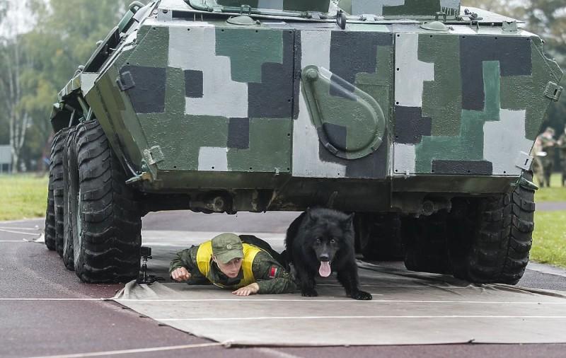 В Подмосковье прошли соревнования военных кинологов 3933594_2675782