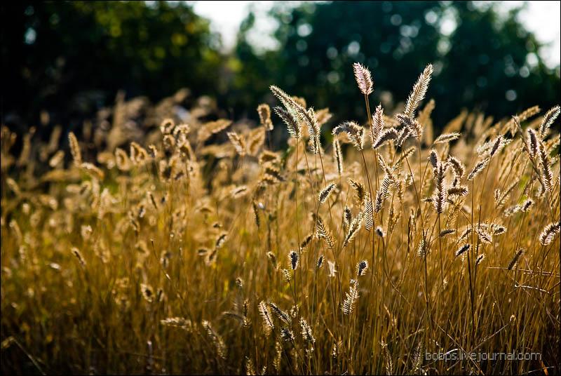 Сухие травы Собачьих бугров