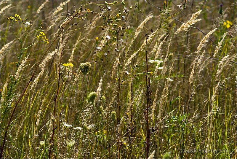 Травы, травы...