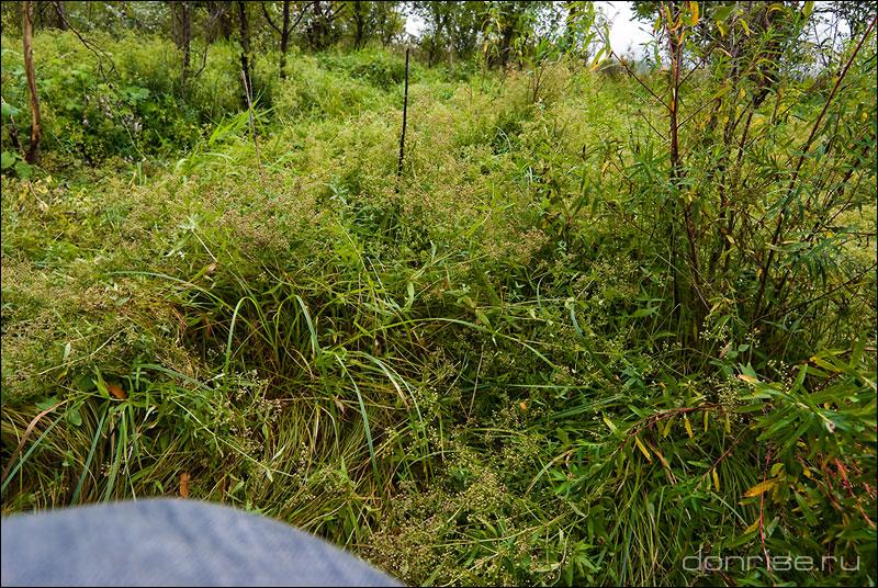 Буйство трав