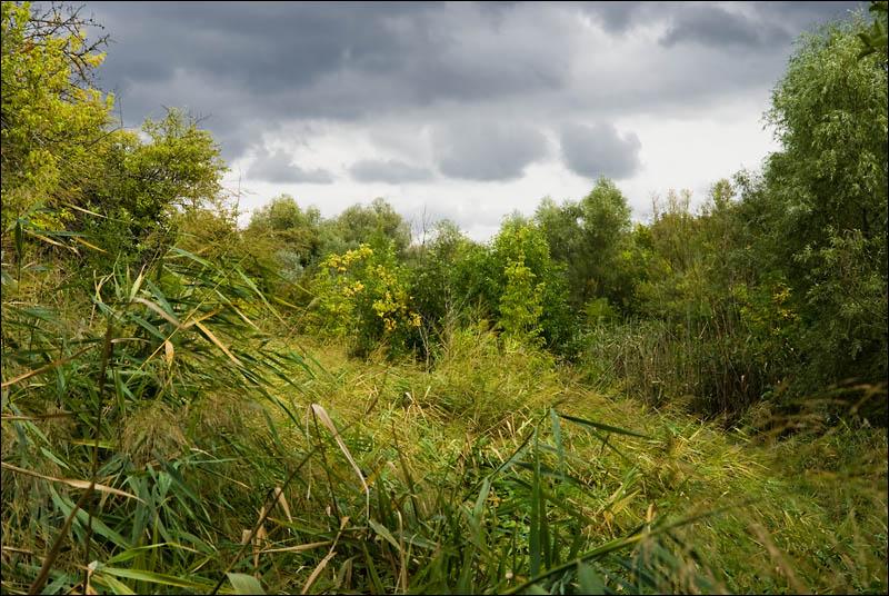 Пойменный лес на Нижнем Дону