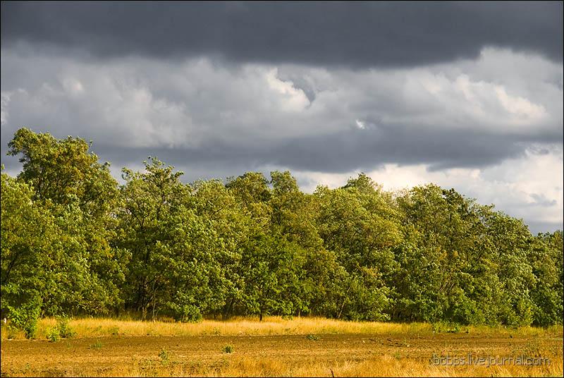 Защитная лесополоса