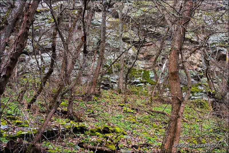 Лес и скалы