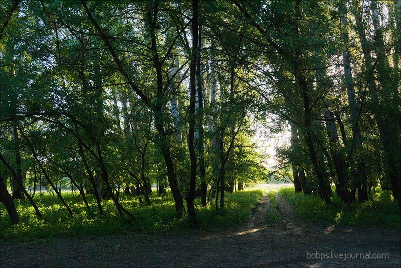 По дороге в пойменном лесу