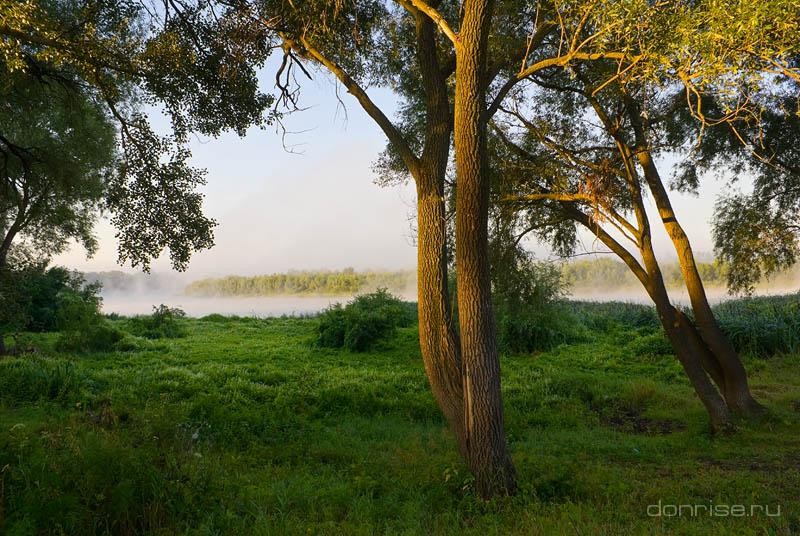 Пойменный лес Среднего Дона