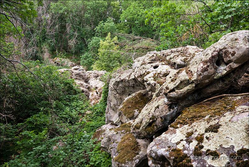 Внутри Каменного Леса