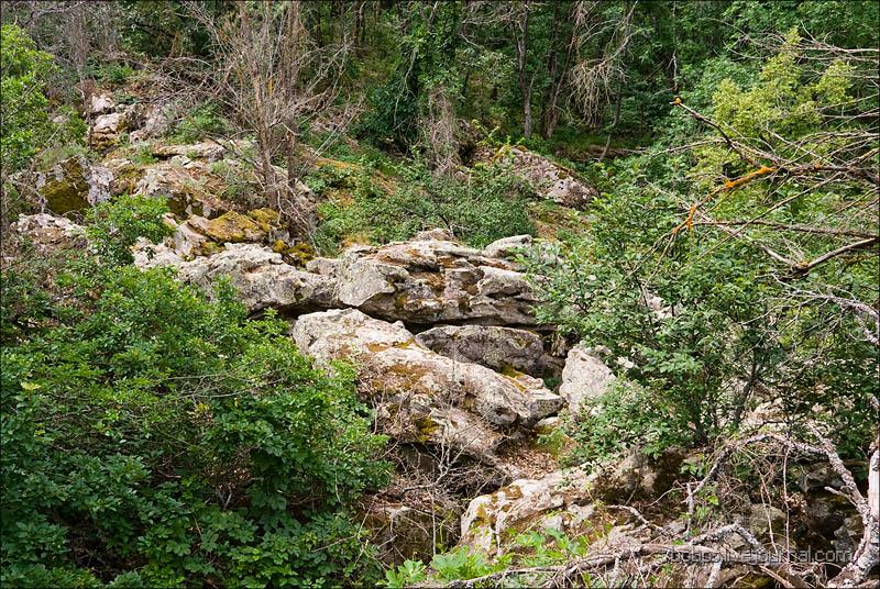 Каменные нагромождения в Каменном Лесу