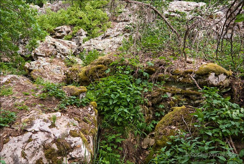 В Каменном Лесу