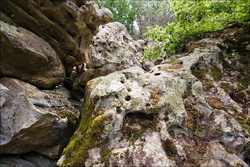В каменной расщелине