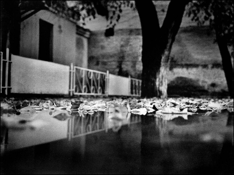 Лебединое озеро, 1990 г