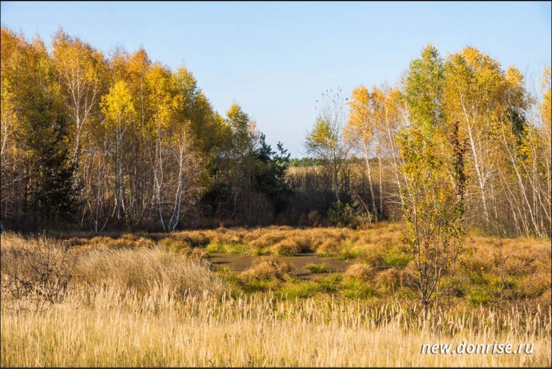Осоковое болото в окружении березняка