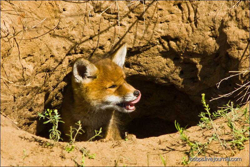 fox06
