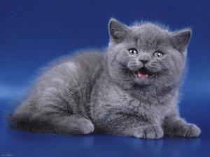kitty057