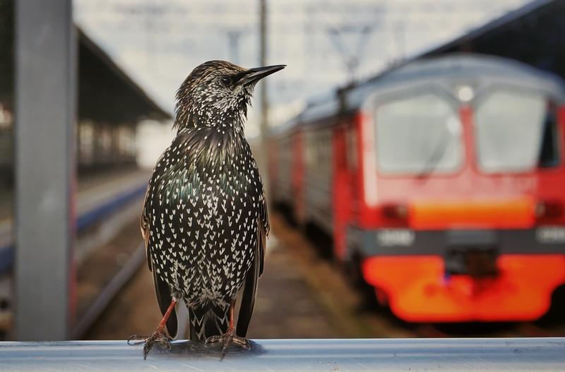 Золотой голос Ярославского вокзала. Попрошайка совсем не боится людей. Поет за еду.