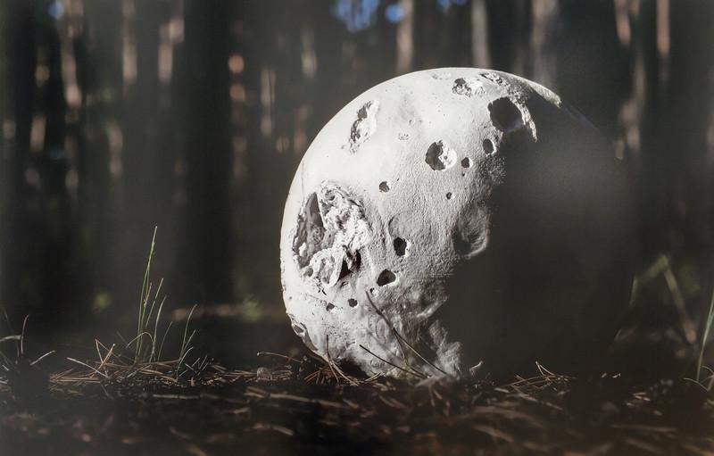 Луна в миниатюре – гриб дождевик.