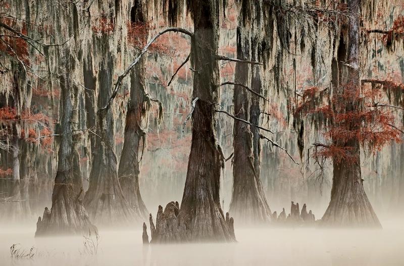 Утро туманное, утро… Мауро Баттистелли, Италия. Место съемки: Кипарисовые болота Техаса.