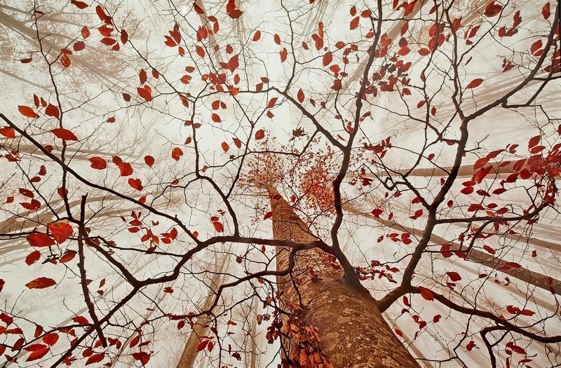 Осень танцует вальс бостон. Даниэле Пантанали, Италия.