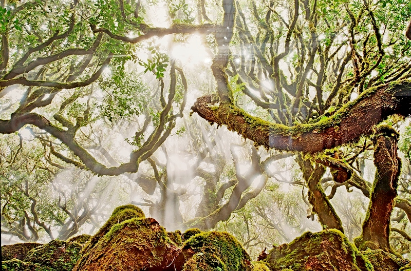 Вечное. Лавровый лес. Радомир Якубовски, Германия. Место съемки: Мадейра.
