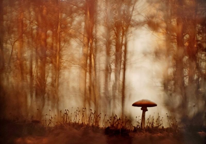 Одиночество в сказочном лесу. Юлия Втюрина, Россия. Место съемки: Ленинградская область.