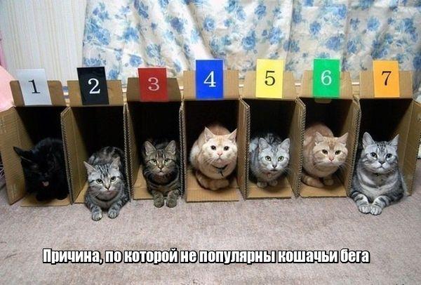 Коты 6_1