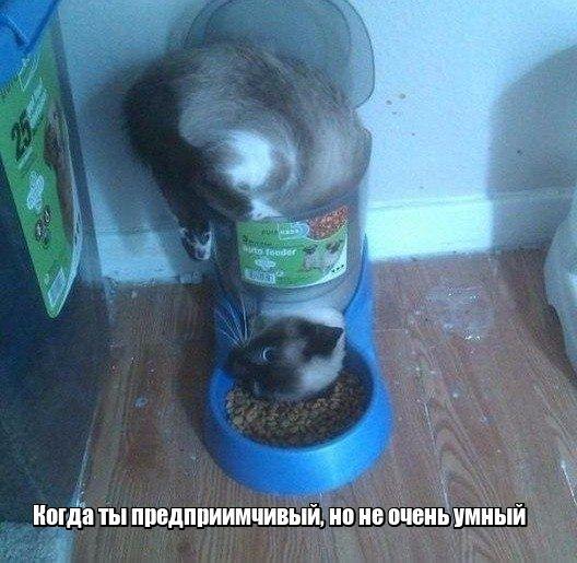 Кот4_1