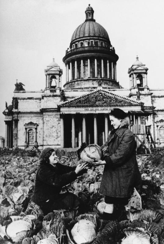 Девушки из бригады МПВО (местной противовоздушной обороны) снимают урожай капусты с подсобного участка на Исаакиевской площади в августе 1942 года