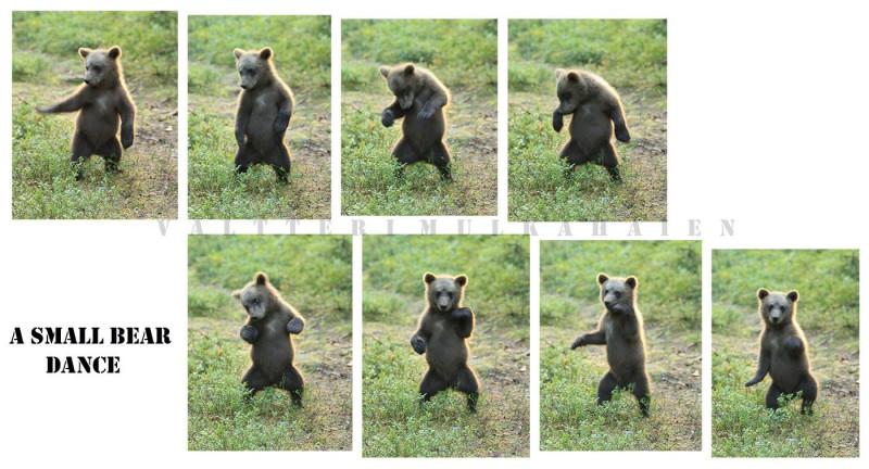 Танцующий мишка