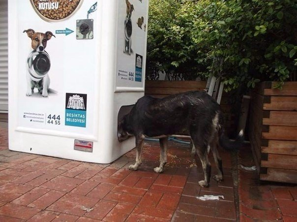 Еда для животных на улице