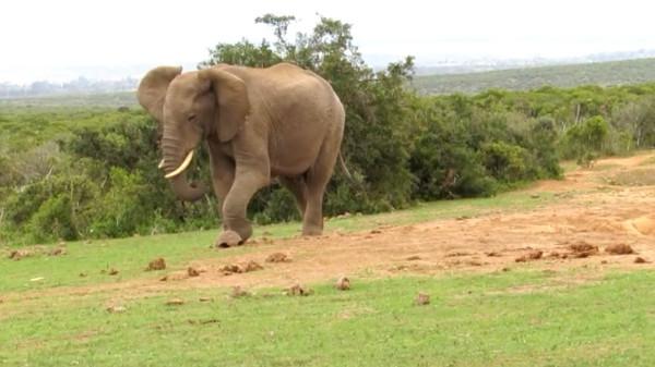 Слон и черепаха