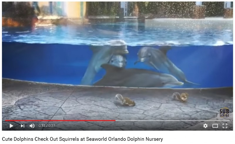 Дельфины и белки.jpg