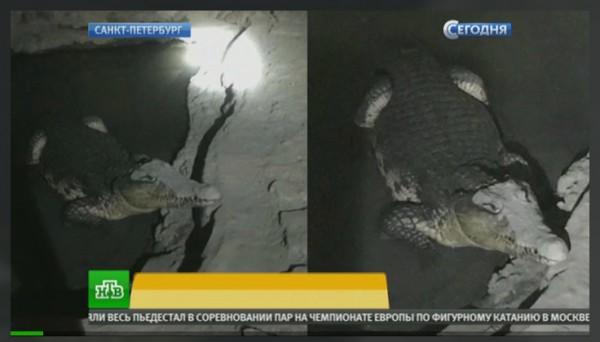 НТВ - Крокодил.jpg