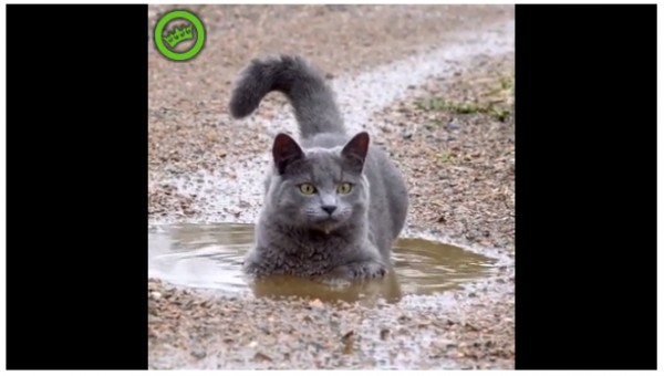 Кот в грязи!.jpg