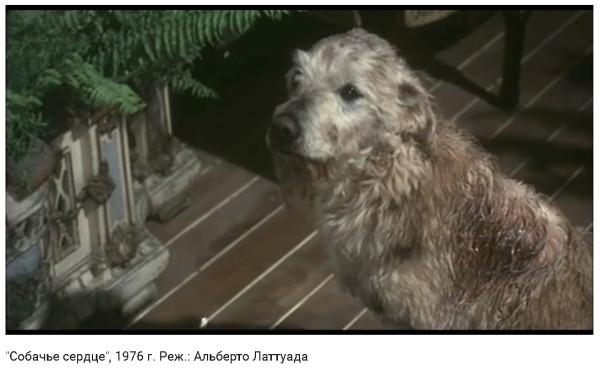 Собачье сердце - Италия.jpg
